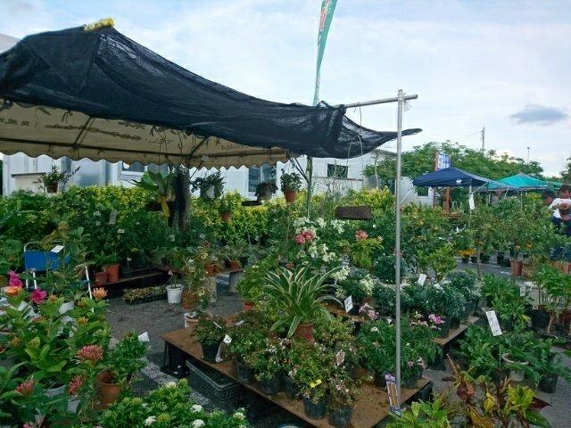 南のまち植木・園芸市